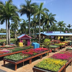 Flamingo Road Nursery Garden Center Davie Fl
