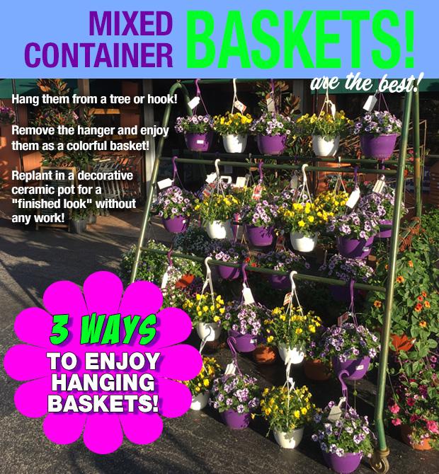 Hanging Baskets - Enjoy them three ways!!!