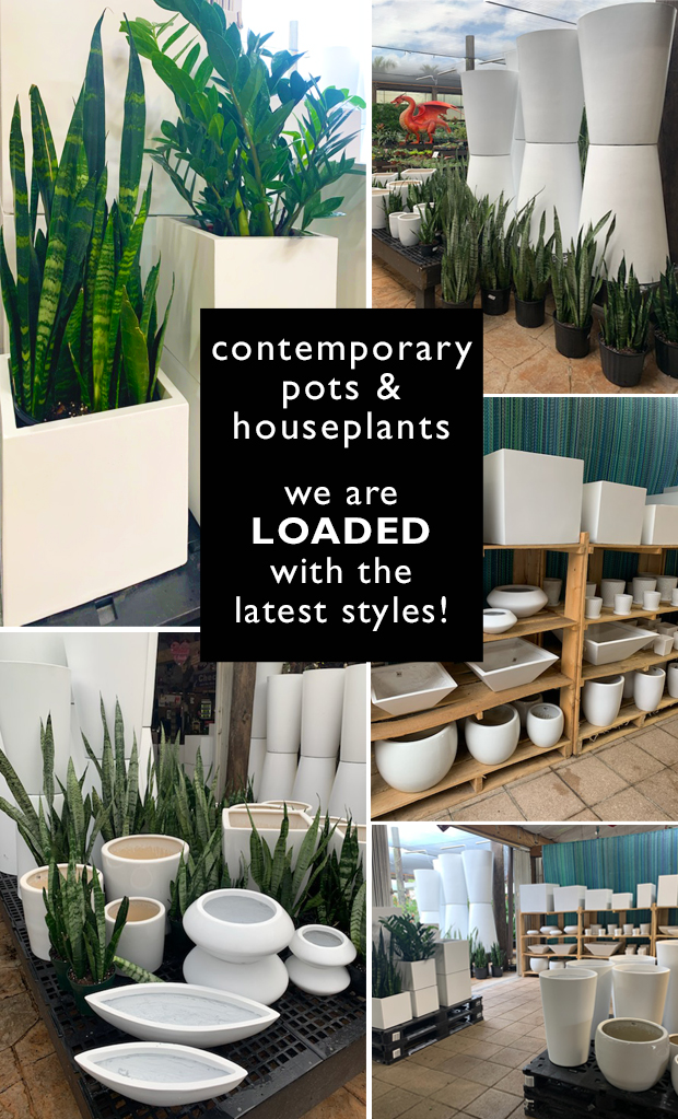 Contemporary pots and houseplants are in! We are LOADED with the latest styles.