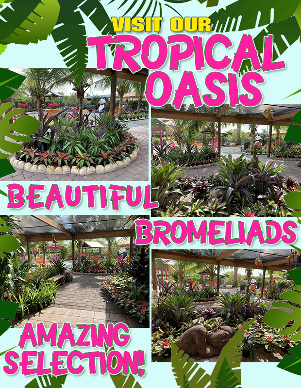 Check out our BEAUTIFUL Tropical Oasis, gorgeous bromeliads and an amazing selection!