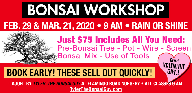 Bonsai workshop Febuary 29 and March 21 at 9 am, Just $75 includes all you need to go home with your own bonsai!