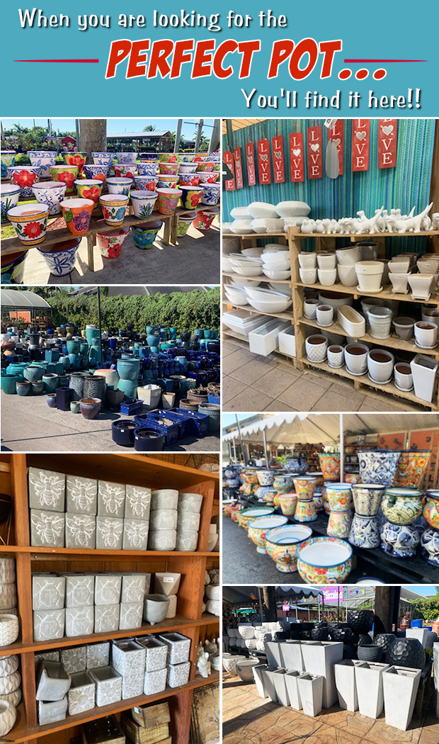 If you are looking for the PERFECT POT, you will find it here!
