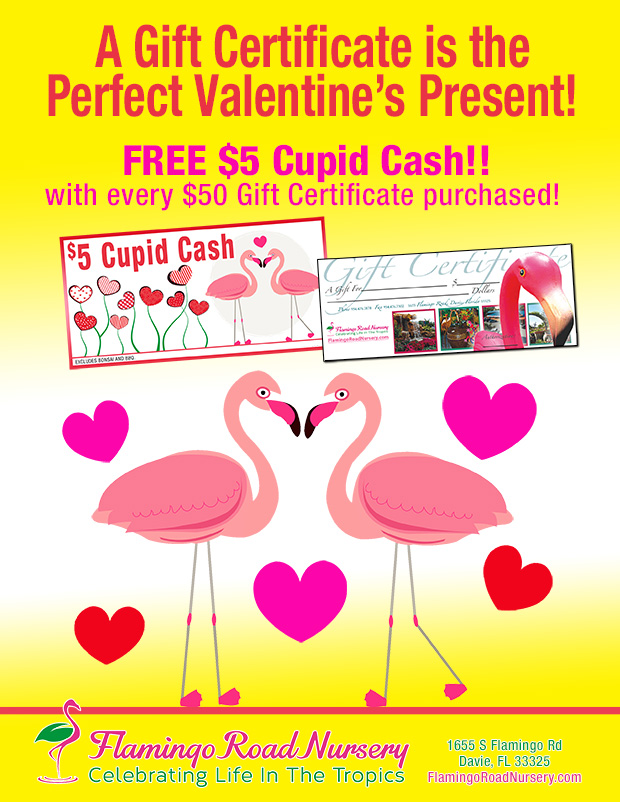 Spend fifty dollars and get a $5 FREE cash certificate