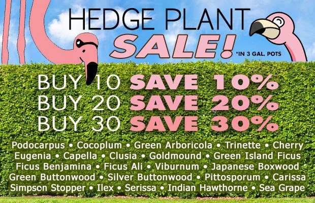 Hedge plant sale, Buy More, Save More! Buy 10, get 10% off, 20 get 20% off, 30 get 30% off!!!