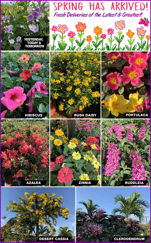 Spring has arrived! Fresh deliveries of the latest and greatest for your garden.