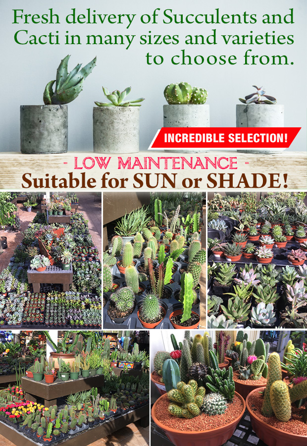 We are packed with beautiful succulents - perfect for sun or shade and low maintenance.