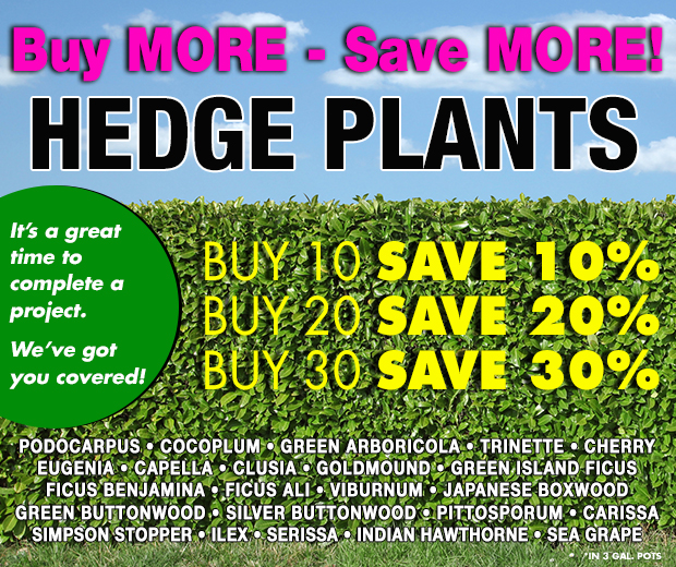 Hedge plants - BUY MORE, SAVE MORE!