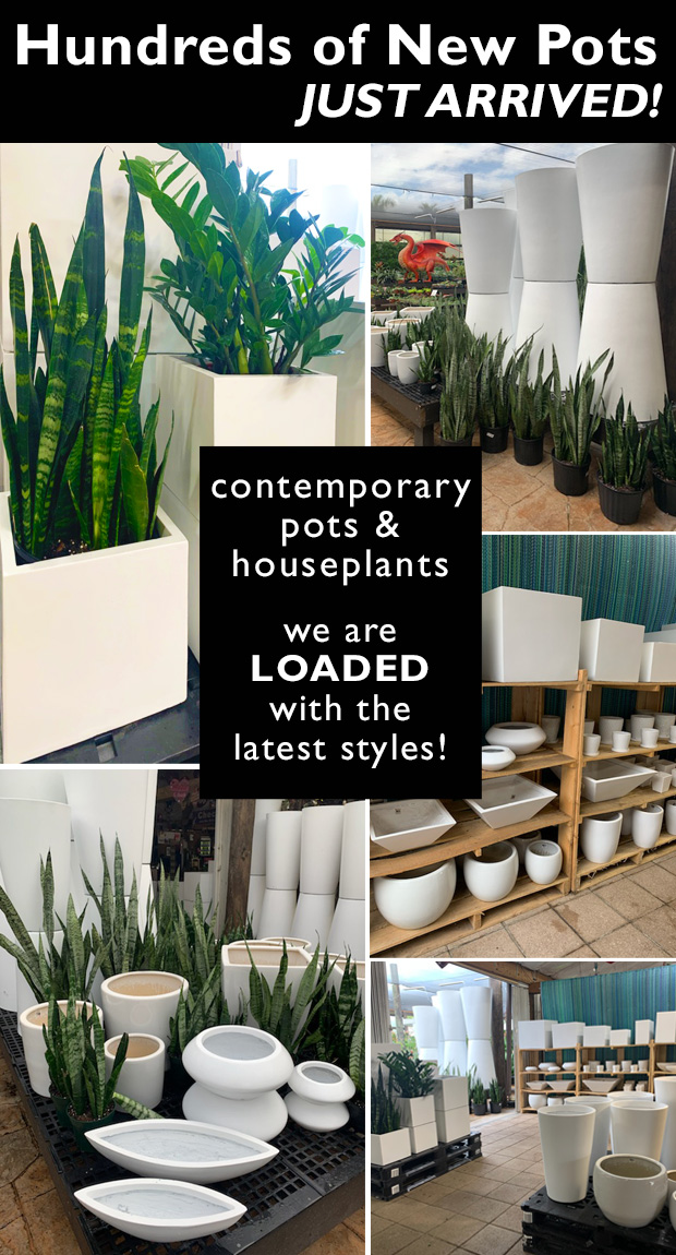FRESH DELIVERY JUST ARRIVED! Beautiful pots and plants for that modern look.