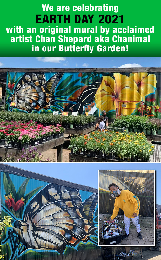 We are Celebrating Earth Day 2021 with an original wall mural by acclaimed artist Chan Shepard a/k/a Chanimal in our Butterfly Garden!