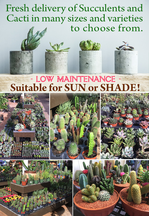 WE ARE LOADED with Succulents - just arrived! Great for sun or shade, stock up now for the best selection.