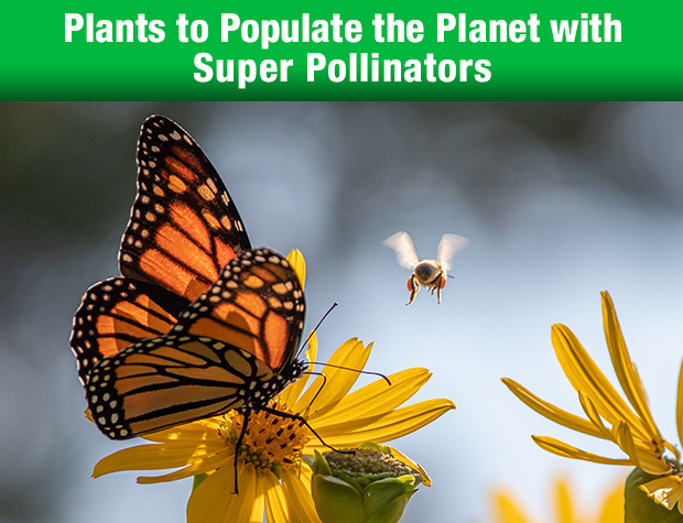 Plants to Populate the Planet with Super Pollinators