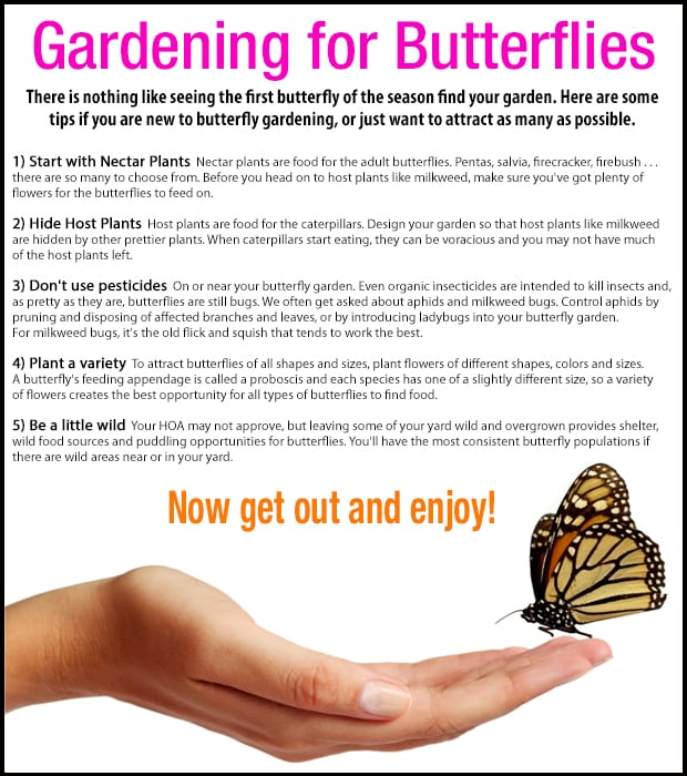 5 Butterfly Gardening Tips you won't want to miss!