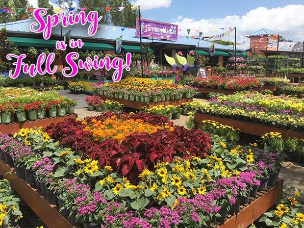 Spring is in Full Swing!