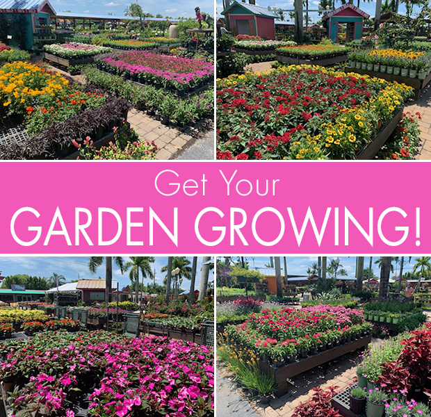 Get Your GARDEN GROWING! We are loaded with beautiful flowers!