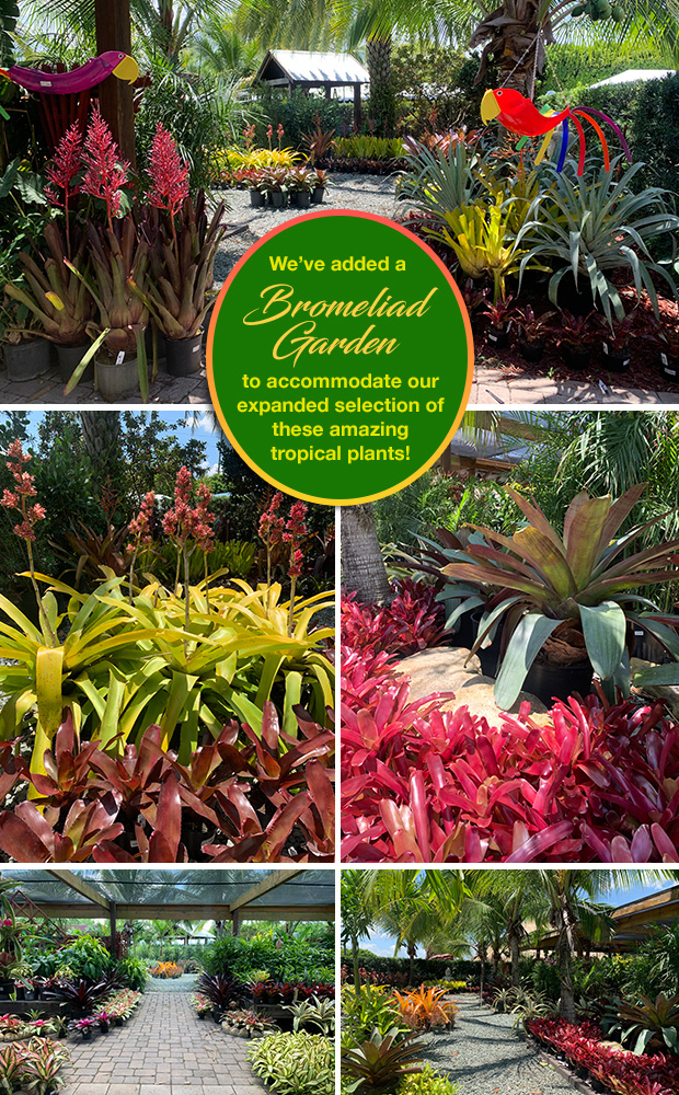 We've added a Bromeliad Garden to accommodate our expanded selection of these amazing tropical plants!