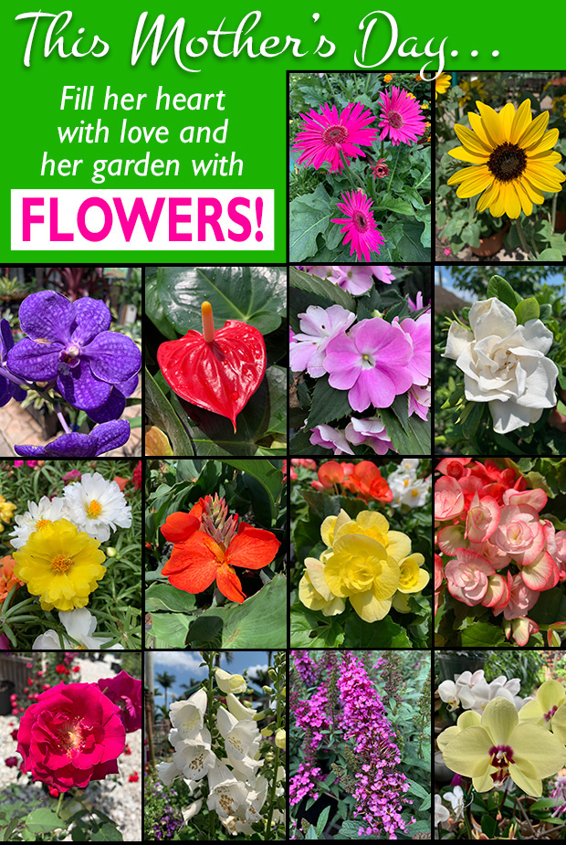 This Mother's Day fill her heart with love and her garden with FLOWERS!