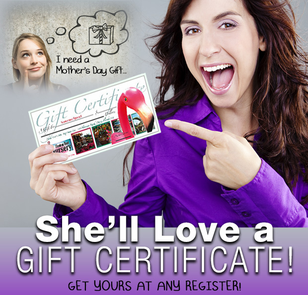 Don't know what to get Mom? She'll LOVE a Gift Certificate from Flamingo Road Nursery.