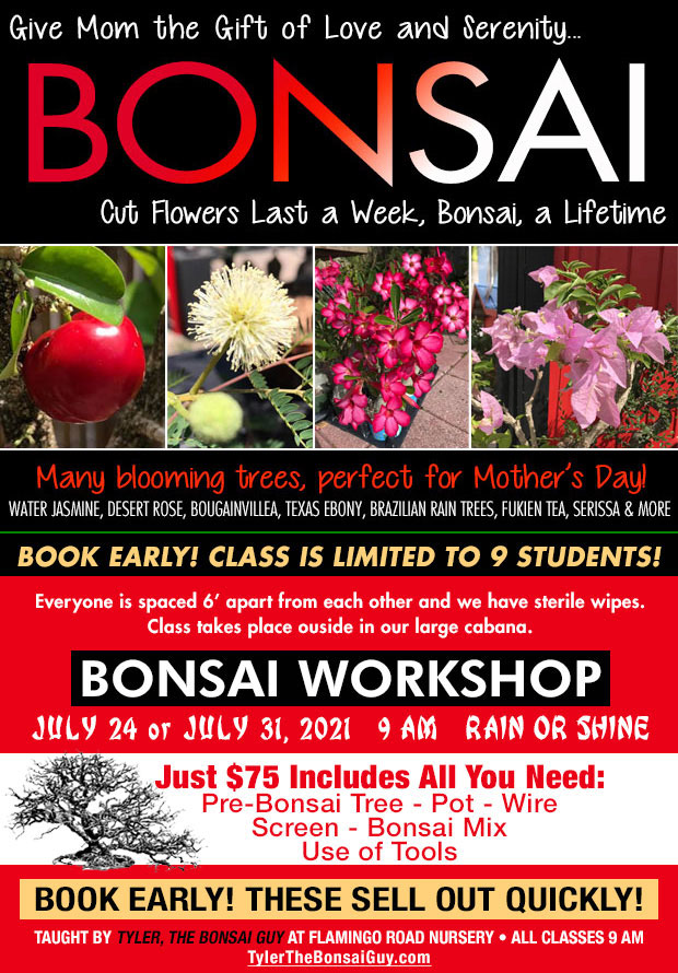 Bonsai workshop July 24 and July 31, at 9 am, Just $75 includes all you need to go home with your own bonsai! These workshops make a great gift!