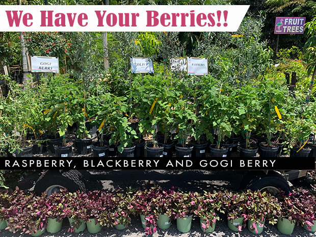 We have your berries! Raspberry, blackberry and Goji berry.