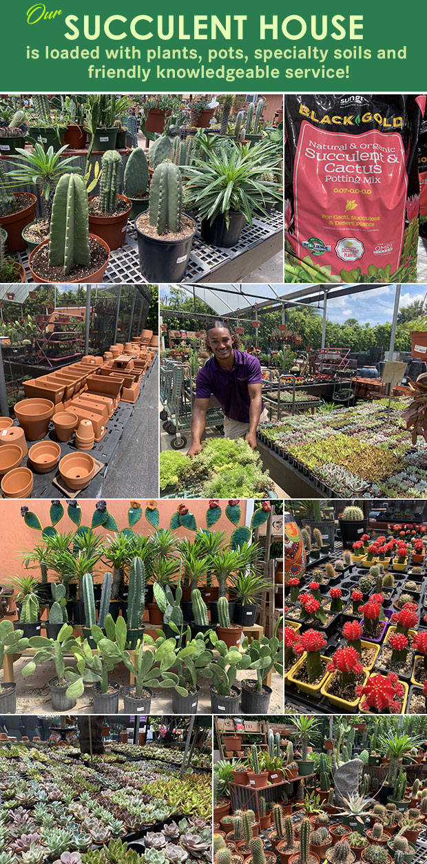 Our Succulent House is loaded with plants, pots, specialty soils and friendly knowledgeable service