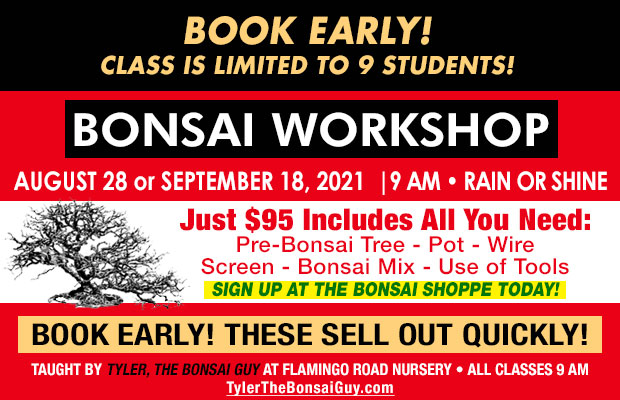 Bonsai workshop August 28 or September 18, at 9 am, Just $95 includes all you need to go home with your own bonsai! These workshops make a great gift!