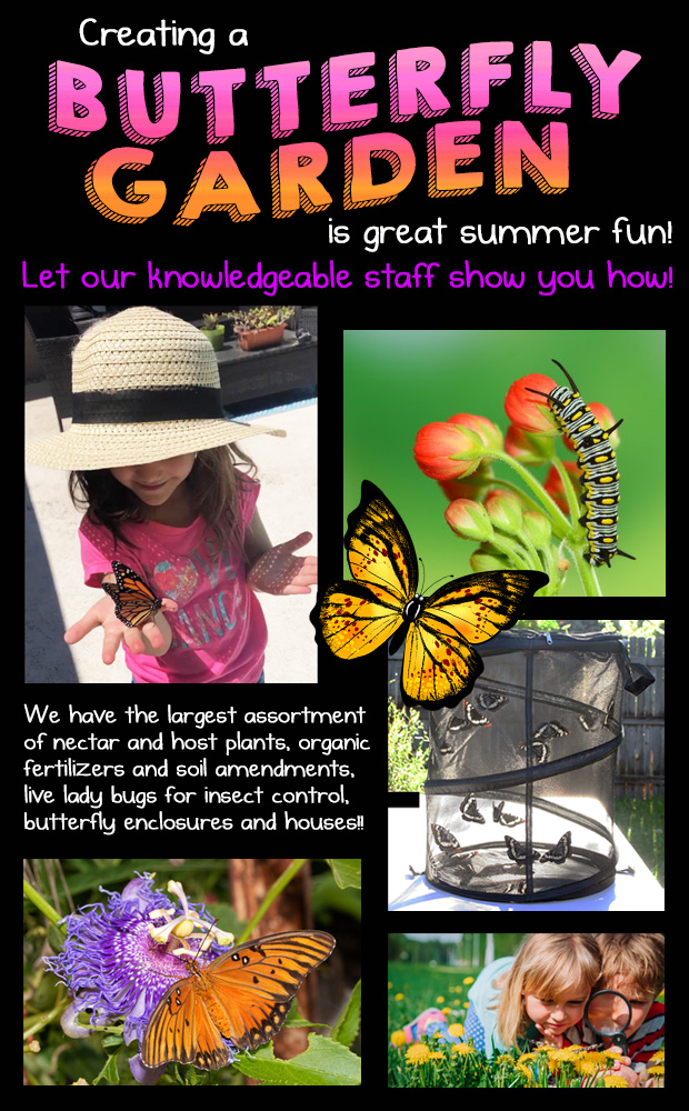 A Butterfly Garden is a great summertime family activity and we have everything you need. Let our knowledgeable staff help you!
