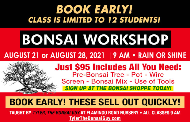 Bonsai workshop August or August 28, at 9 am, Just $95 includes all you need to go home with your own bonsai! These workshops make a great gift!