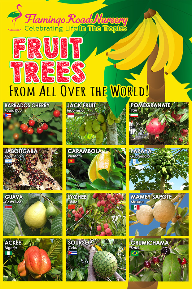 Fruit Trees from all over the world. Celebrate Life in the Tropics!