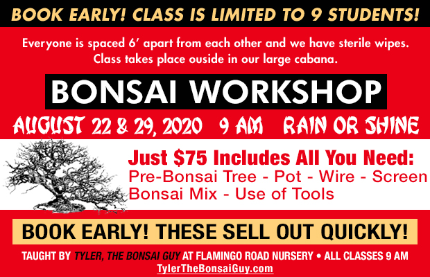 Bonsai workshop August 22 and 29, at 9 am, Just $75 includes all you need to go home with your own bonsai! These workshops make a great gift!