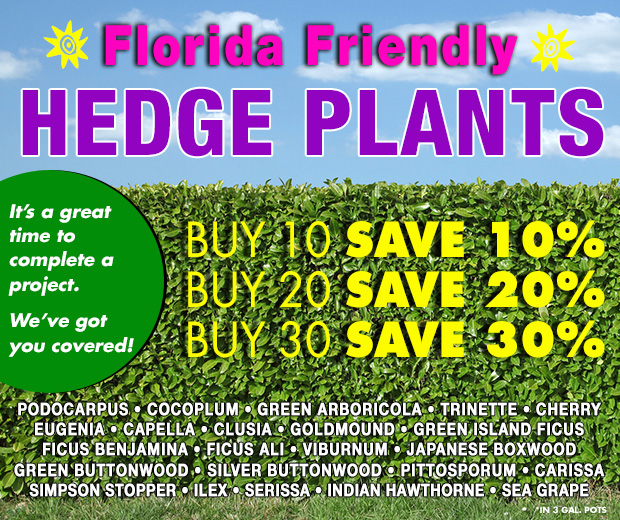 FLORIDA FRIENDLY Hedge plants - BUY MORE, SAVE MORE!