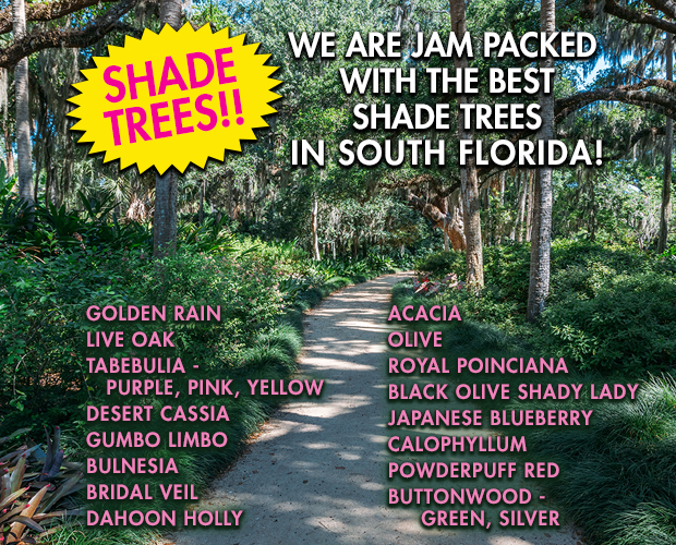 Shade trees, many varieties in stock. We have the best shade trees in South Florida!