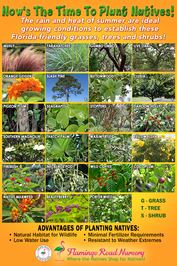 We have tons of native plants! Easy to grow and suitable for our environment.