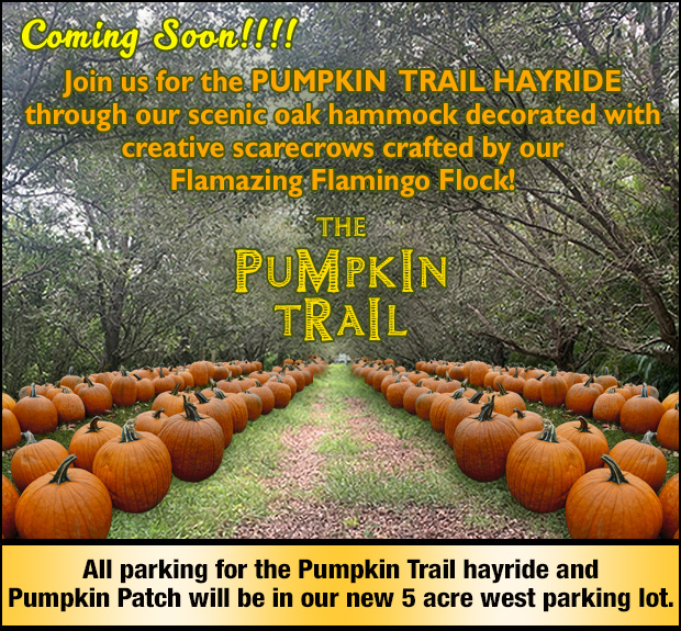 Coming Soon! Our PUMPKIN TRAIL! Thousands of pumpkins to choose from!