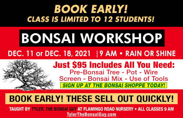 Bonsai workshop December 11 or December 18, at 9 am, Just $95 includes all you need to go home with your own bonsai! These workshops make a great gift!