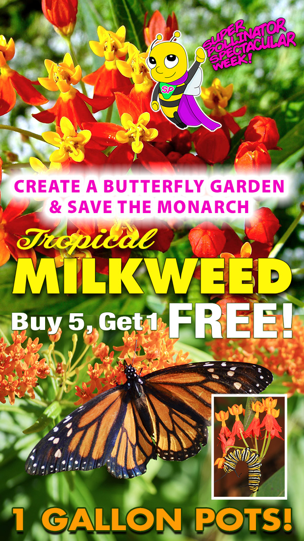 Create a butterfly garden and save the Monarch! Milkweed - Buy 5 get 1 free, 1 gallon pots.