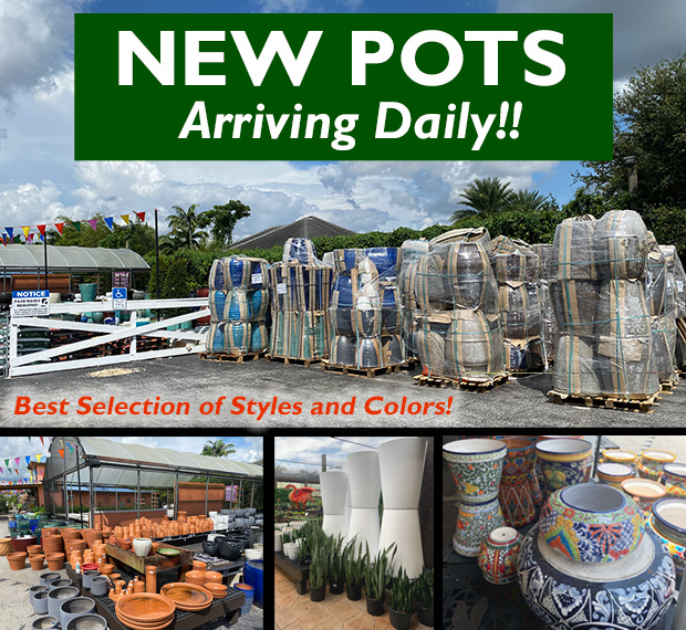 New pots arriving daily!!! We have the best selection of styles and colors.