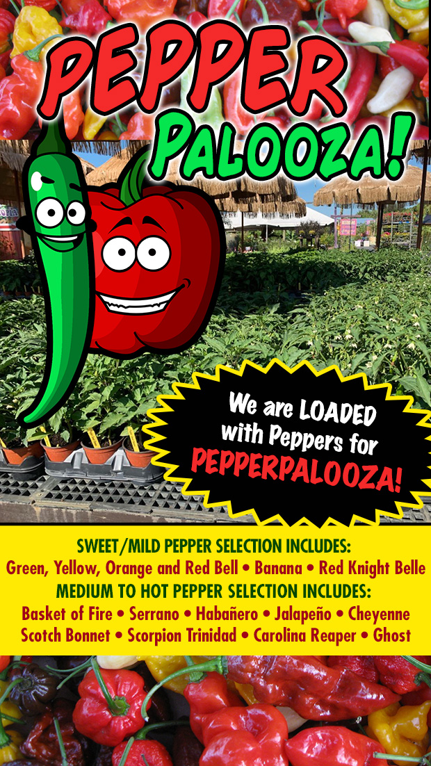 It's Pepperpalooza! We are loaded with peppers, hot, sweet and everything in between.