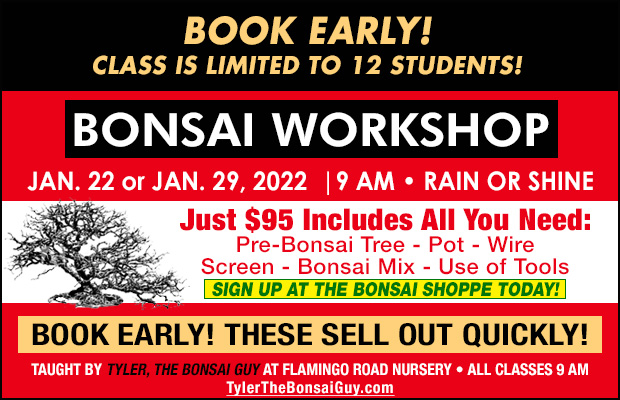Bonsai workshop January 22 or January 29. 2022, at 9 am, Just $95 includes all you need to go home with your own bonsai! These workshops make a great gift!
