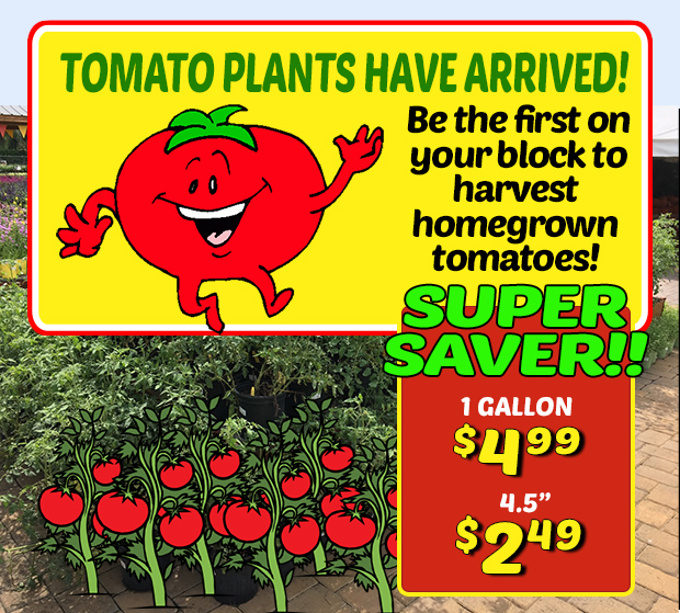 "Tomato plants have arrived! SUPER SAVINGS...just $4.99 for 1 gallon pots and $2.49 for 4.5"" pots."