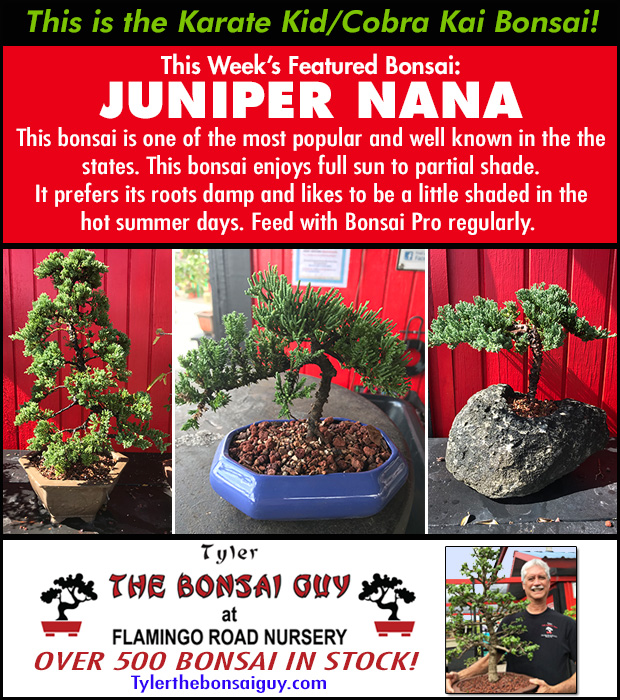 This week's featured Bonsai is JUNIPER NANA - The Karate Kid tree!. We have over 500 Bonsai in stock.