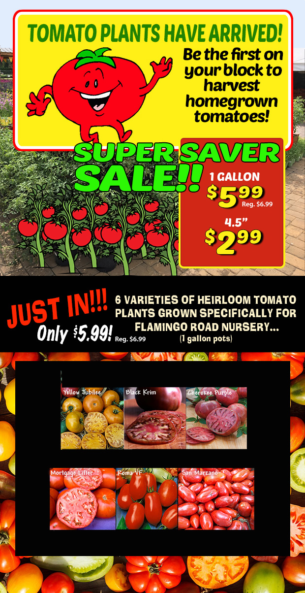 """Tomatoes just in, only $599 for a 1 gallon pot! 4.5"""" just $2.99!"""""""