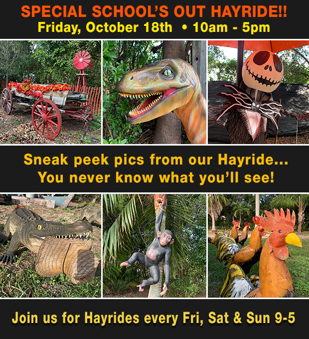 Friday is no school, special hayrides 10am to 5pm. Also join us every Fri, Sat and Sun 9am - 5pm.