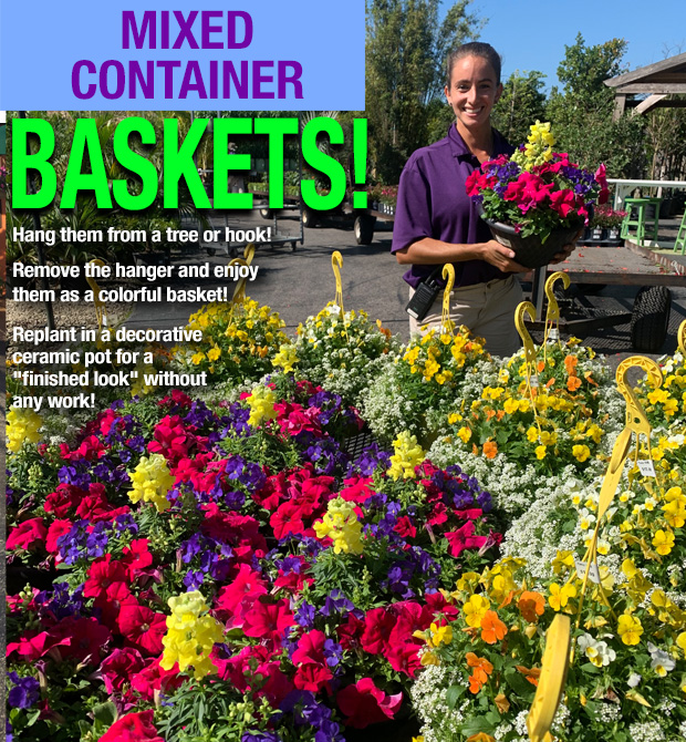 Mixed container baskets for beautiful fall color.