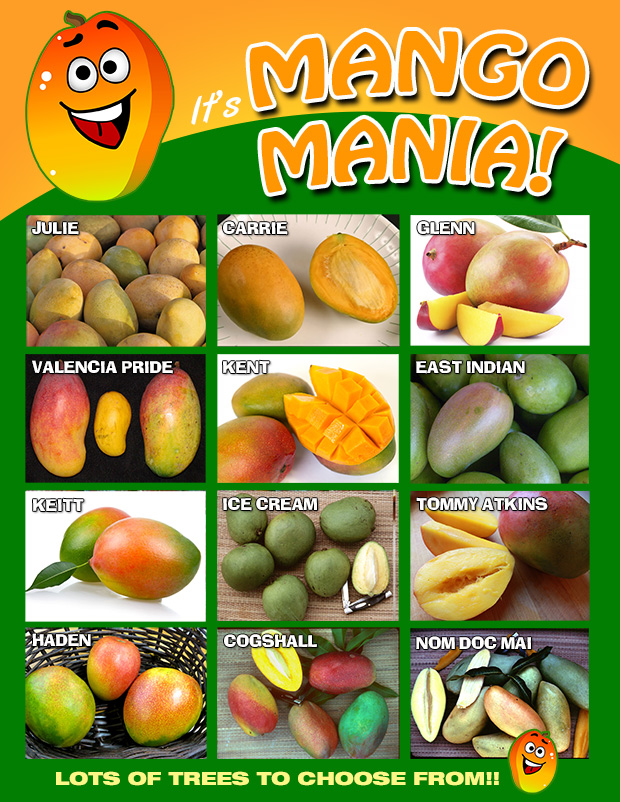 It's Mango Mania at the nursery, several varieties to choose from!