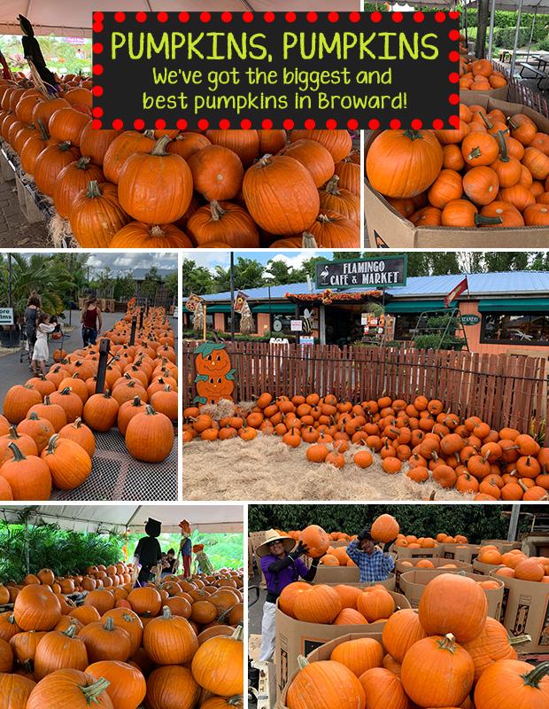 Pumpkins, pumpkins and more pumpkins! We have the biggest and best in Broward!