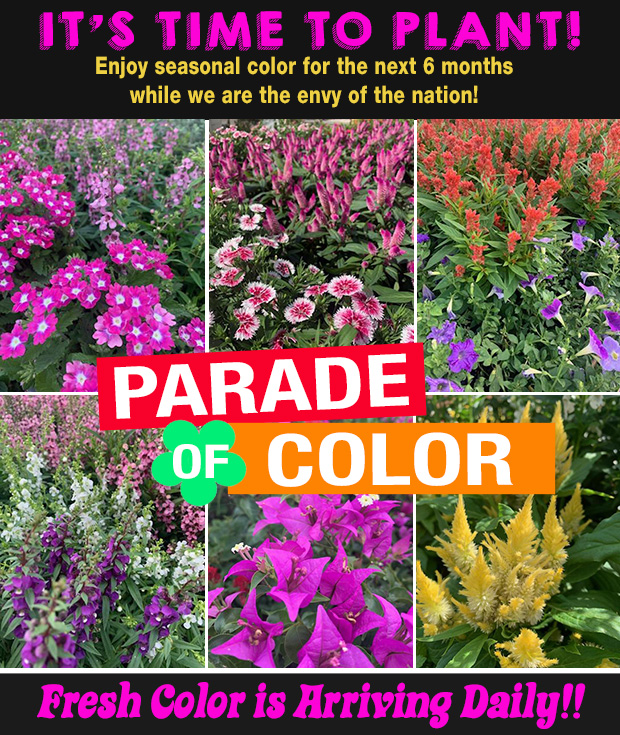 It's time to plant seasonal color! PARADE of COLOR! Fresh color arriving now!