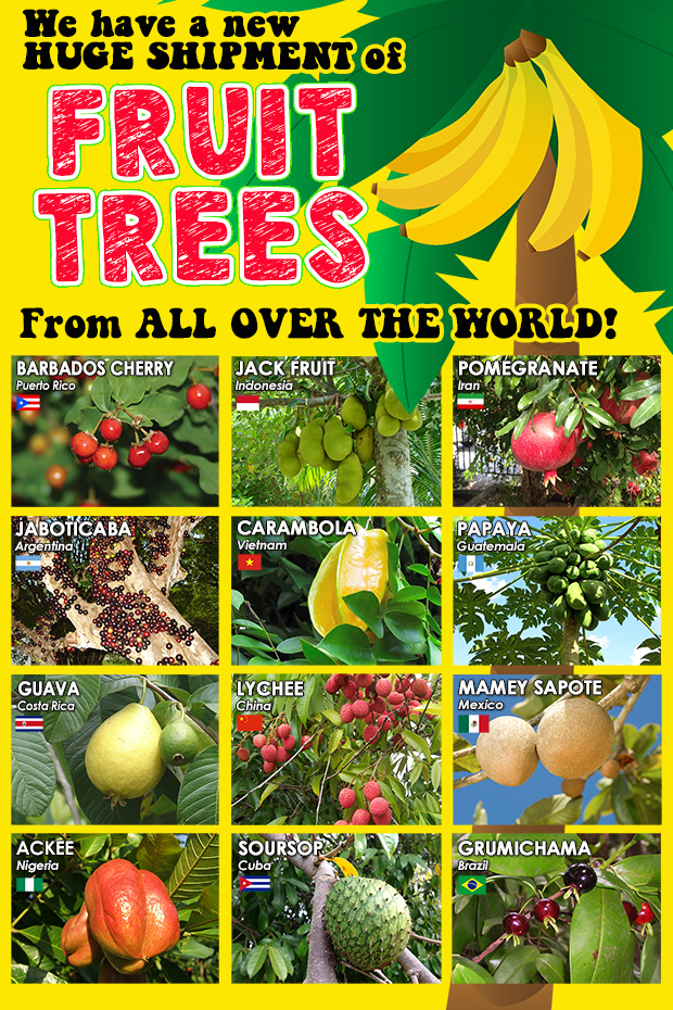We have fruit trees from all over the world, and we just received a very large shipment of new inventory.