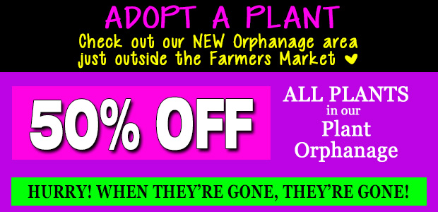 Check out our new orphanage area just outside the Farmers Market. All plants 50% off while supplies last!