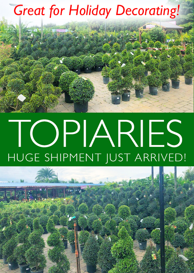 Huge shipment of TOPIARIES just arrived. Great for your holiday decor!