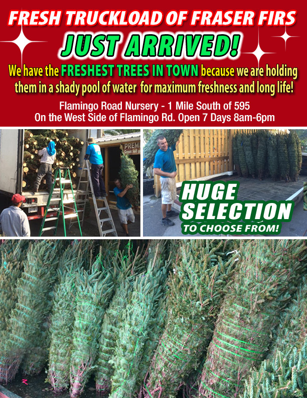 Fresh Christmas Trees HAVE ARRIVED!!!